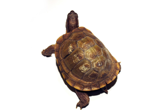 turtle - Newsletter